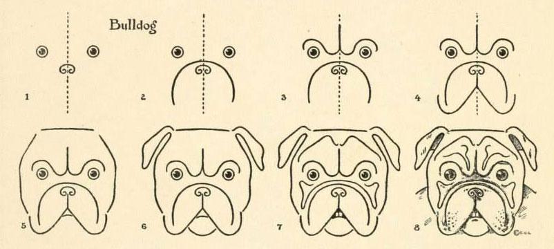 Hoe teken je een bulldog